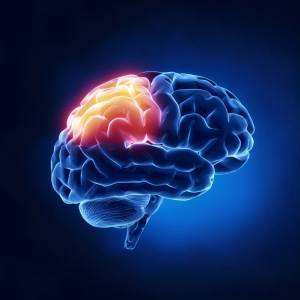 cérebro5